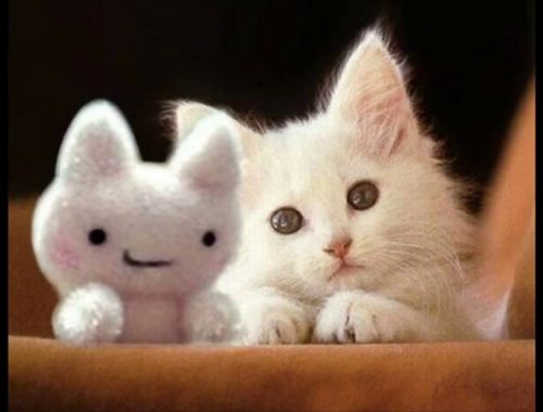 Image of: Silly Really Cute Cats And Kittens White Funny Cat On Slide Cute Kittens Videos Cat Videos Kitten Videos Kitty Videos Youtube Funny Cats Videos Archives Cute Kittens Videos