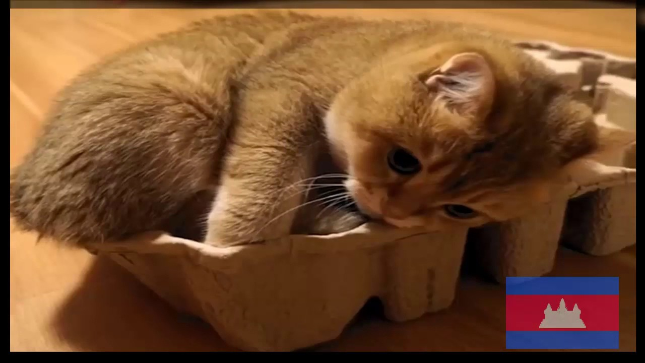 why cats pee on your stuff