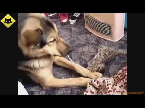 The Cutest Baby Puppies Kittens Weekly Compilation 2017 Funny