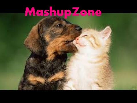 Funny Puppies And Kittens Videos Archives Cute Kittens Videos
