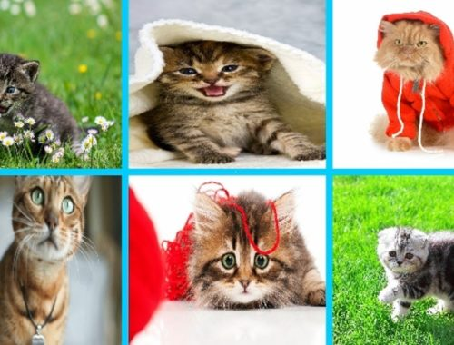 Animals For Kids To Watch Archives Cute Kittens Videos