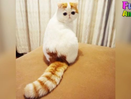 Funniest Cats Ever Archives Cute Kittens Videos